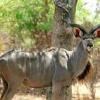 kudu_sidebar1